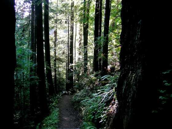 This hike follows the wide and level Fern Canyon Scenic Trail along Little River, near Mendocino. The trail is not only used for hiking, but bird watchers also frequent the popular spot.