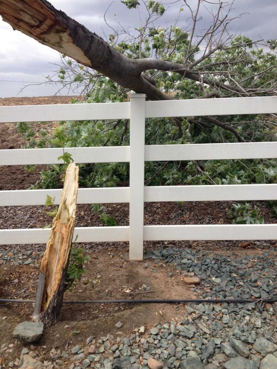 Clements, where a maple tree snapped during the storm (May 14, 2015)