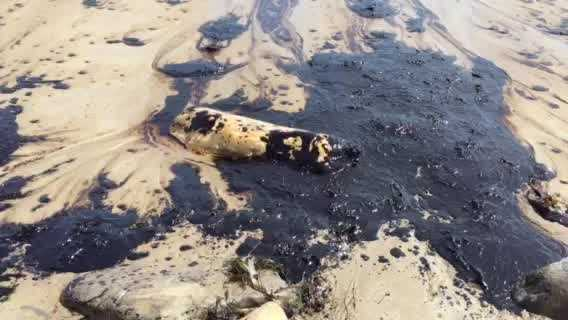 A broken pipeline has spilled oil into the ocean off California's Central Coast. The following video of the spill was provided by KSBY.