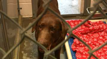 Following the Fourth of July, every available kennel is packed at the Front Street Animal Shelter in Sacramento.