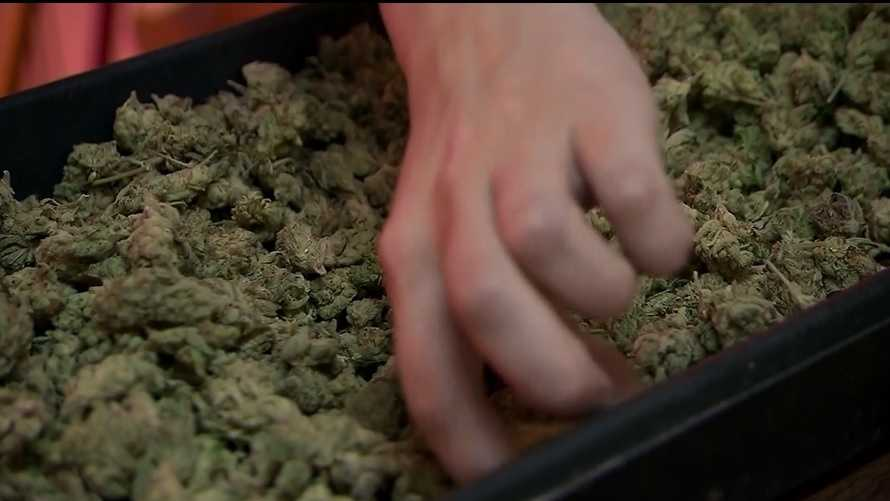 File photo: Marijuana