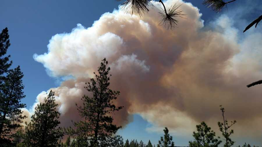 Amidst the pine trees that grass the foothills, smoke from the Lowell Fire rose up into the sky.