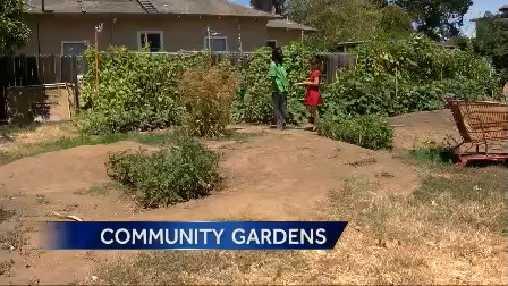 Sacramento urban farming.
