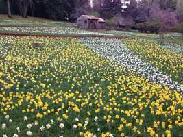 7. Daffodil Hill -- Although it will only open for a few months during the spring, it is a must-photograph spot. Thousands of colorful flowers blanket the hillsides surrounding a few rustic barns and other structures.