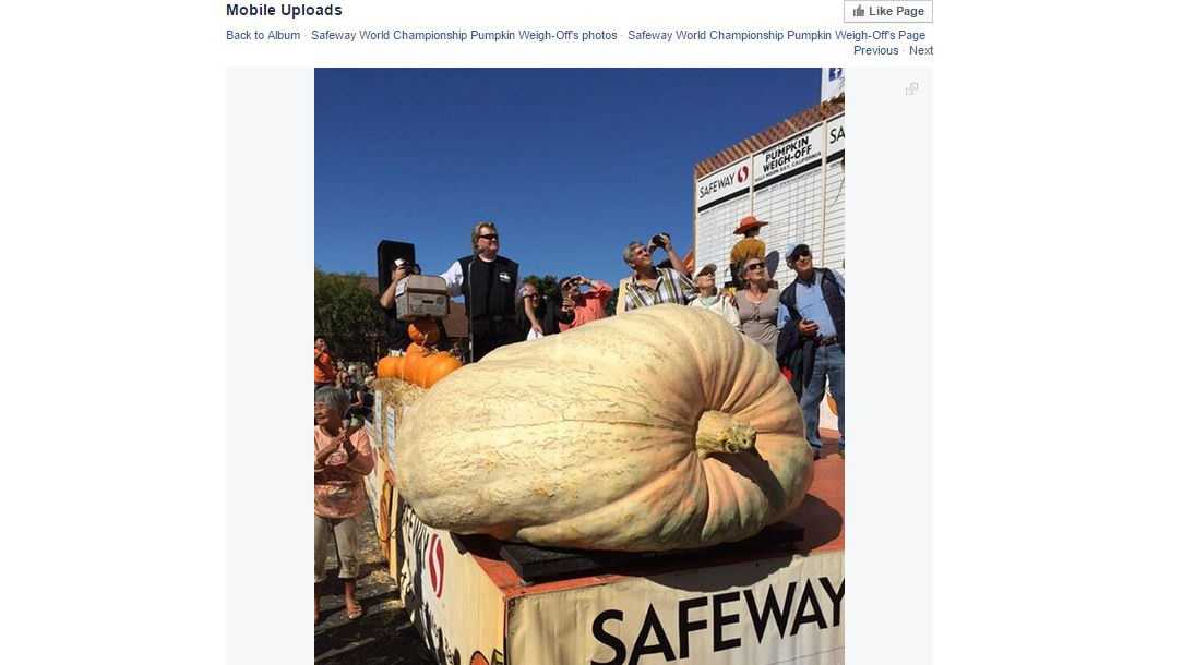 Safeway World Championship Pumpkin Weigh-Off posted a photo of winner Steve Daletas getting his pumpkin weighed on its Facebook page on Monday, Oct. 12, 2015.