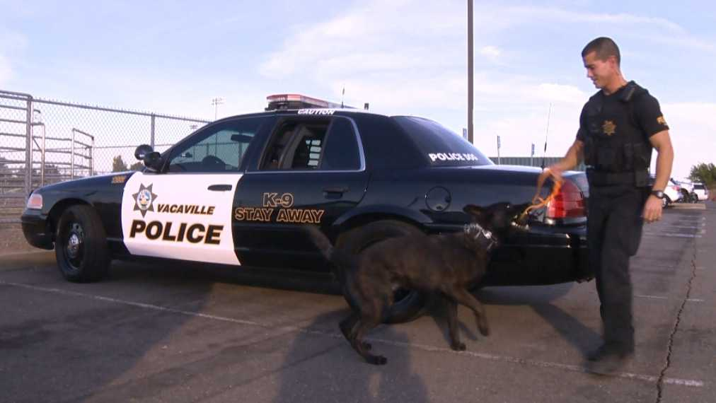 Vacaville K9 Officer Roscoe and his handler Frank Piro.