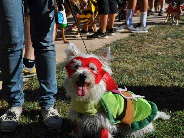 What: Midtown Halloween Festival and Pooch ParadeWhere: Marshall ParkWhen: Sat 1pm-3pmClick here for more information about this event.