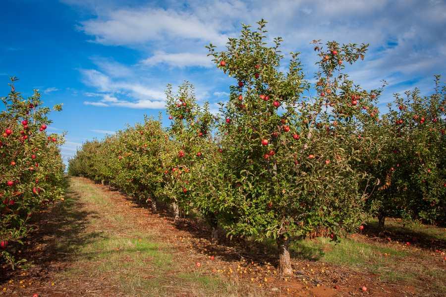 Apple Hill in El Dorado County, Calif.