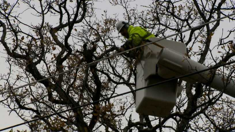 A PG&E contract crew trims a tree in Auburn on Wednesday.
