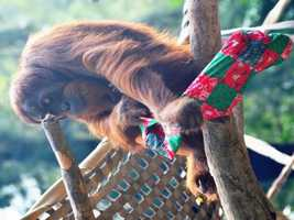 What: Holiday MagicWhere: Sacramento ZooWhen: Sat 10am-4pmClick here for more information on this event.