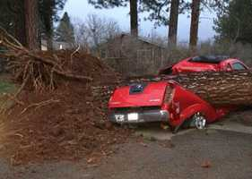 A powerful storm ripped through Northern California at the start of February, causing many trees to come crashing down -- just like this one, which crunched a pickup truck in Shasta County.