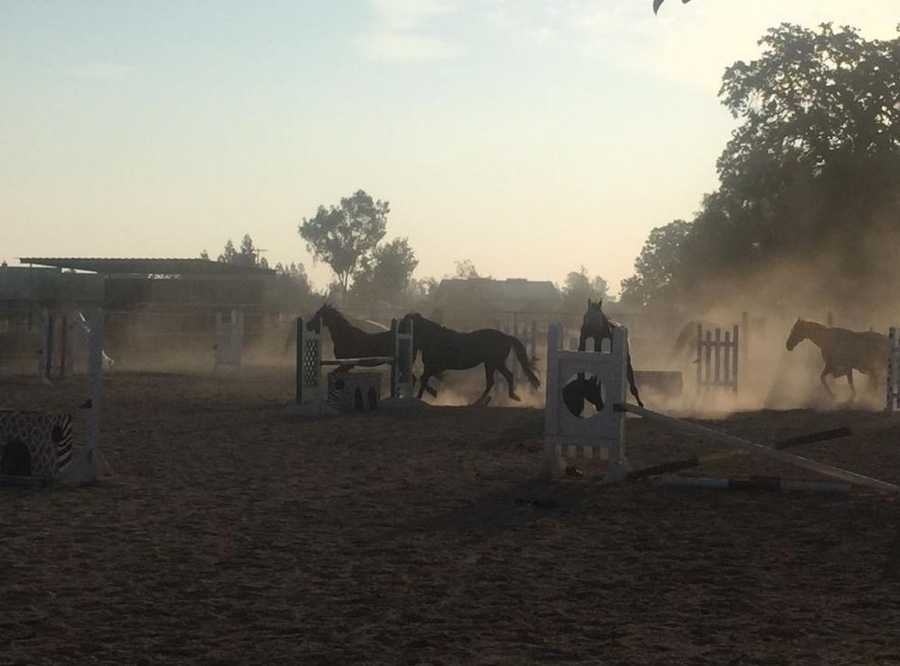 A horse stable in the San Joaquin County town of Acampo went up in flames Aug. 18, killing one horse inside. Neighbors helped save eight horses from the burning stable and went restless as they ran in the corral near the torched barn.