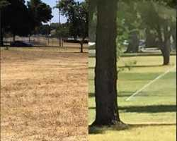 The drought has been an ongoing tale in Northern California during 2015, and while there are varying opinions on how best to handle the drought, one thing is for sure: We need rain! Here are two different perspectives of parks in Sacramento. On the left is Johnston Park in Del Paso Heights and the photo on the right is William Land Park -- both taken on June 8.