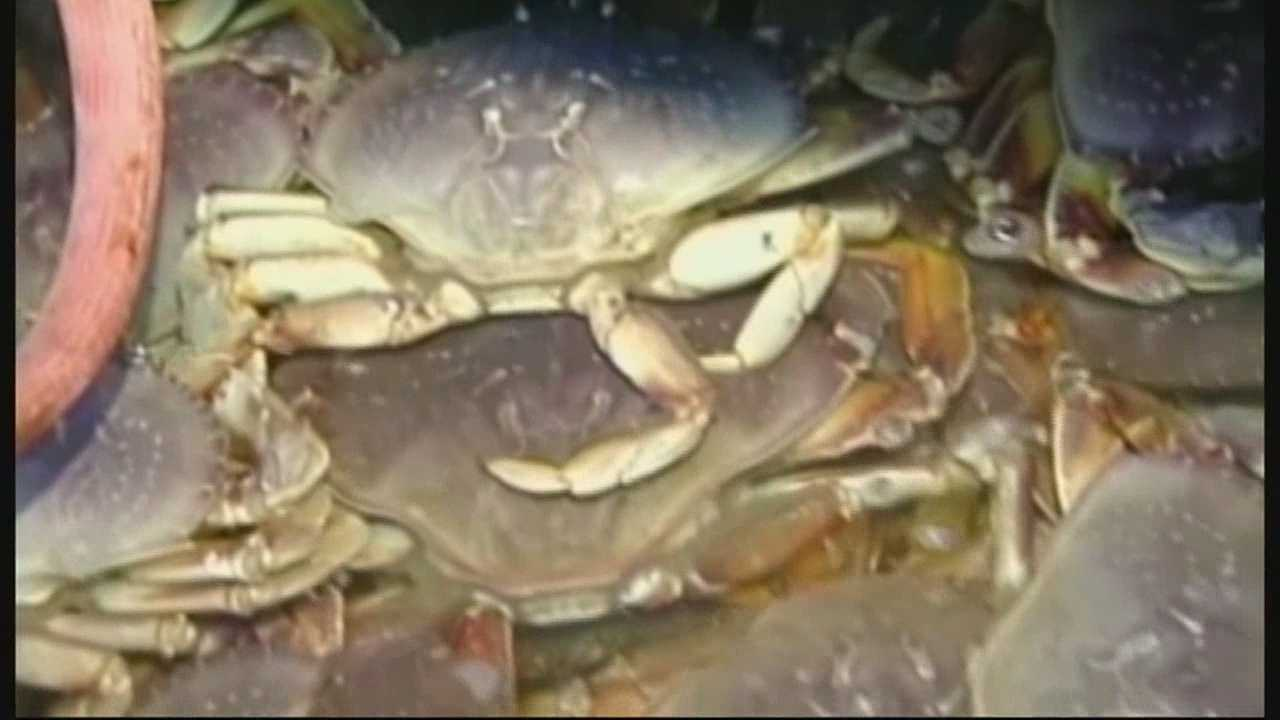 Chances are slim that Central Coast families will feast on local crab anytime before 2016.