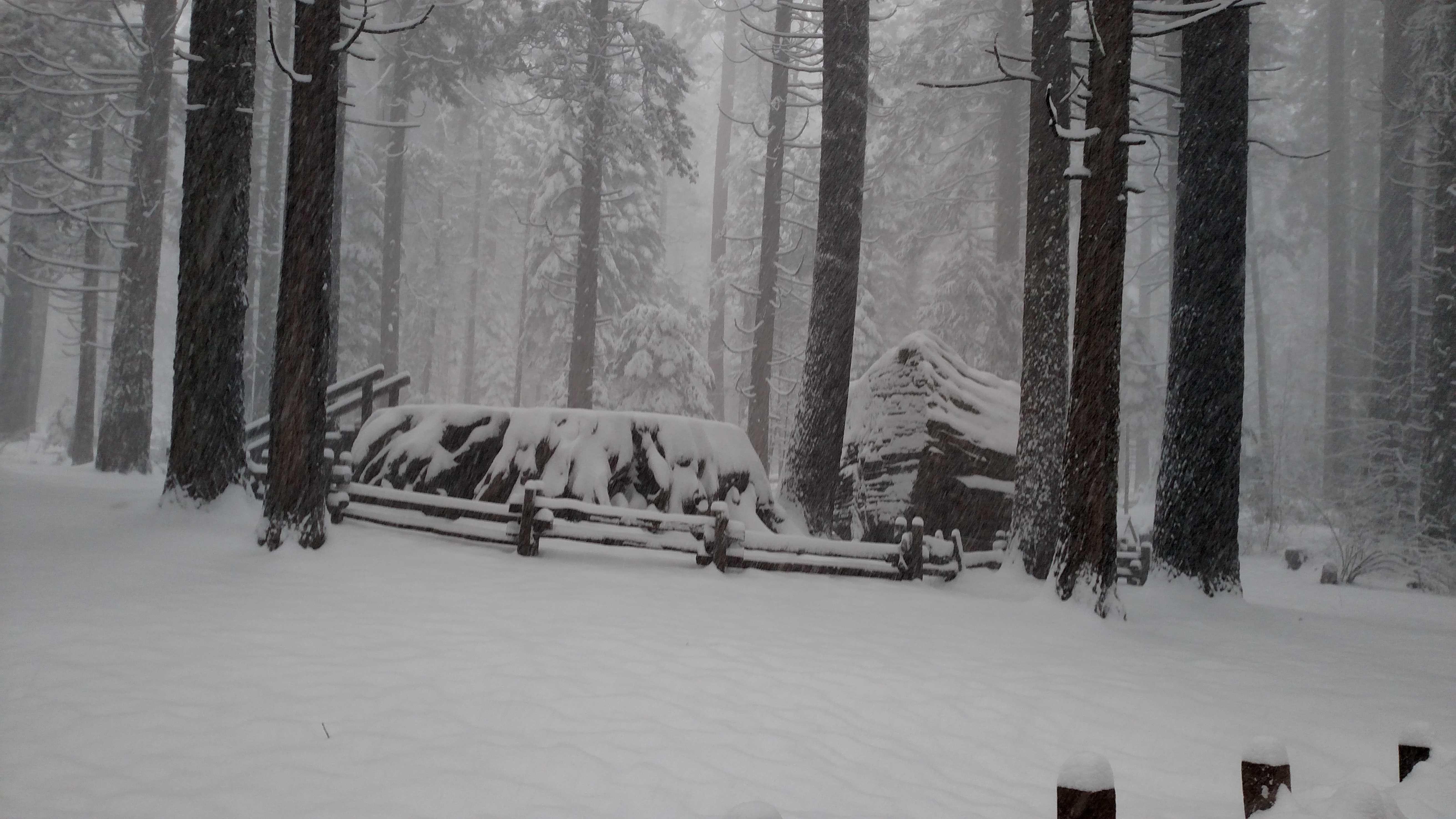 Snow on the Sentinel Tree at Calaveras Big Trees State Park. (Dec. 24, 2015)