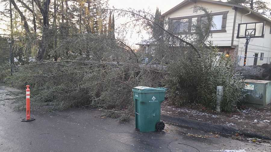 A tornado moving through Cameron Park on Thursday, Dec. 24, 2015, downed trees on Sandpiper Way.