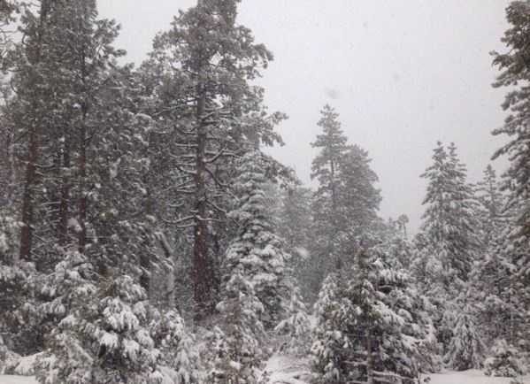 It was definitely a #WhiteChristmas in the #Sierra with lots of fresh powder blanketing the trees and #skislopes over the past few days. This photo was taken at #BlueCanyon by #KCRA's Mike Luery. Hope you had a wonderful #holiday weekend with your family and friends. // #latepost #christmas #Freshpowder #powpow #storm #norcal #sierrasnow #snow #kcrawx #KCRA3 #winterweather