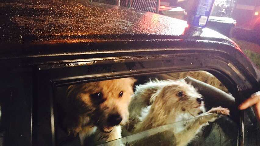 Firefighters were able to rescue 14 dogs from a garage fire in North Highlands. (Jan. 21, 2016)