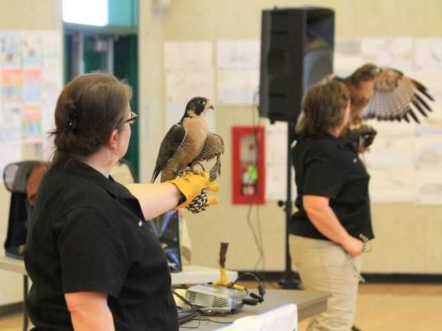 What: 9th Annual Galt Winter Bird FestivalWhere: McCaffrey Middle SchoolWhen: Sat 8am-4pmClick here for more information about this event.