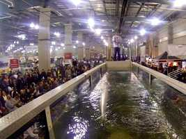 What: International Sportsmen's Expo SacramentoWhere: Cal ExpoWhen: Fri 11am-8pm&#x3B; Sat 10am-7pm&#x3B; Sun 10am-5pmClick here for more information about this event.