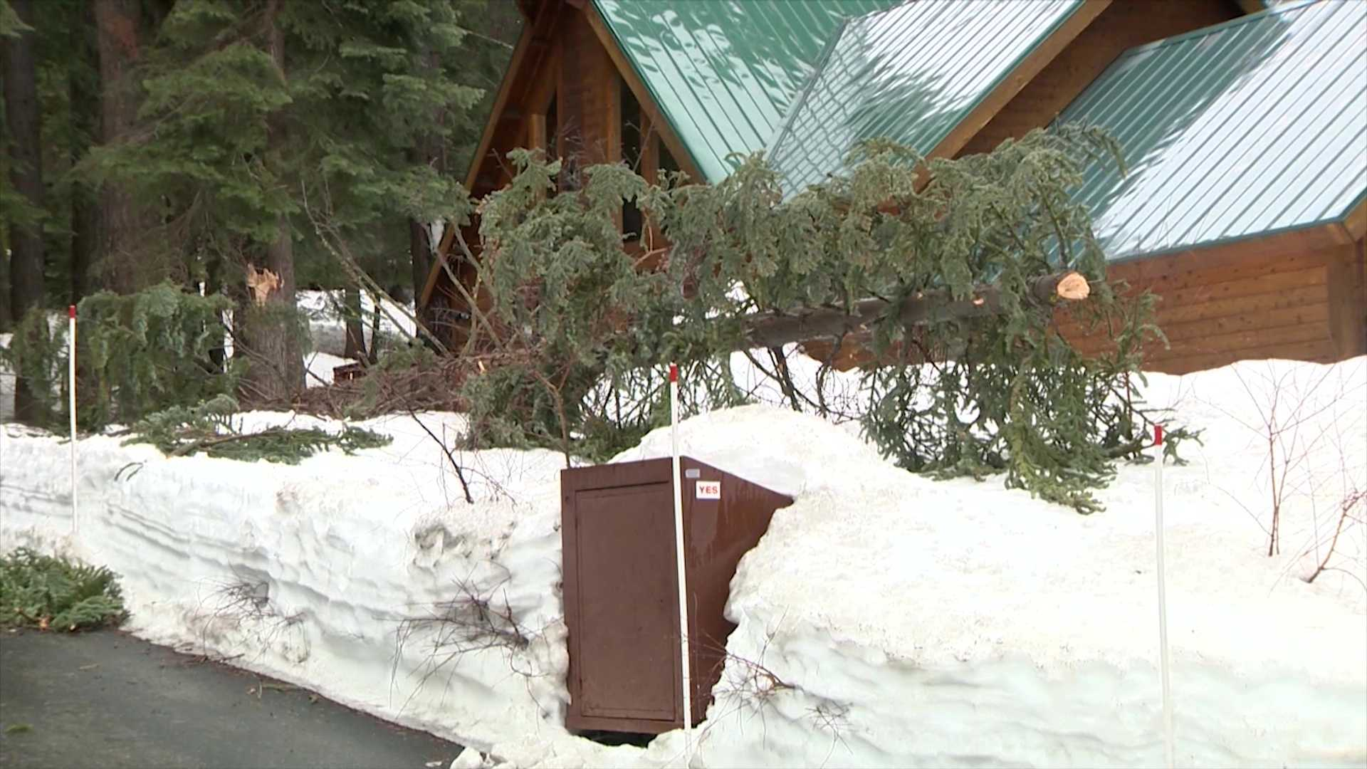 This tree fell over and onto a Jeep Wednesday, Feb. 17, 2016, in Truckee due to strong winds.