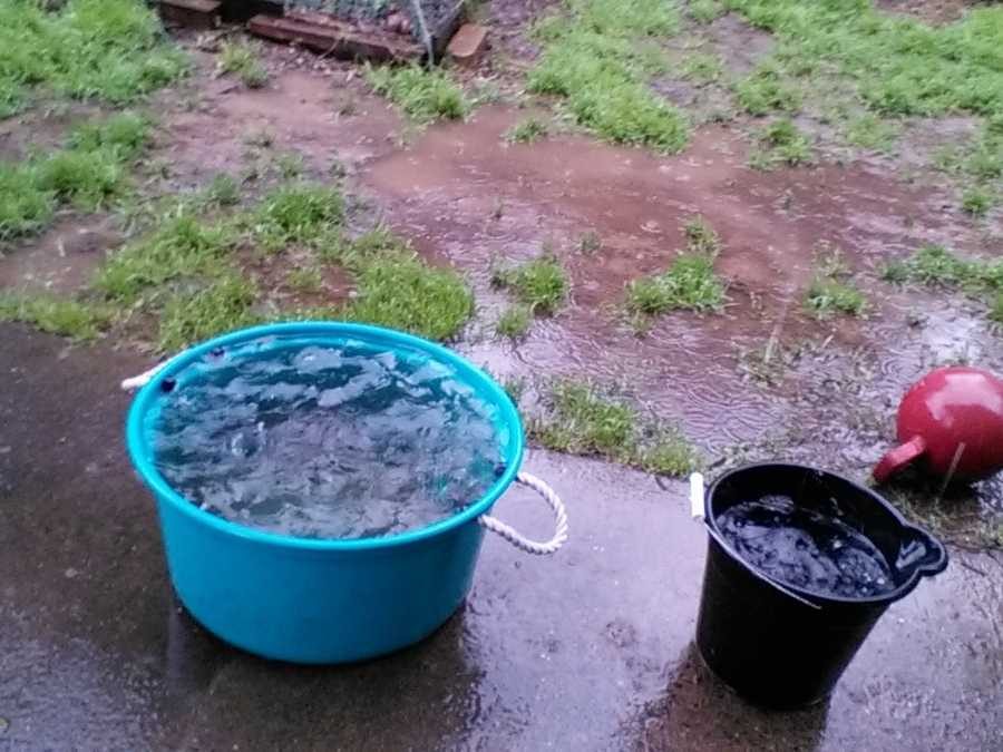 Meanwhile in Orangevale, some people put out buckets to collect all the rain water.