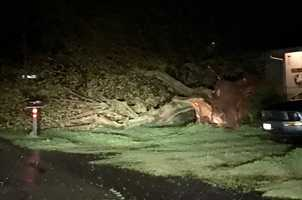 A tree also fell in Yuba City. Fortunately, this tree landed away from a house and driveway.