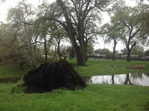 The fallen tree came down close to a playground, but no one was hurt.