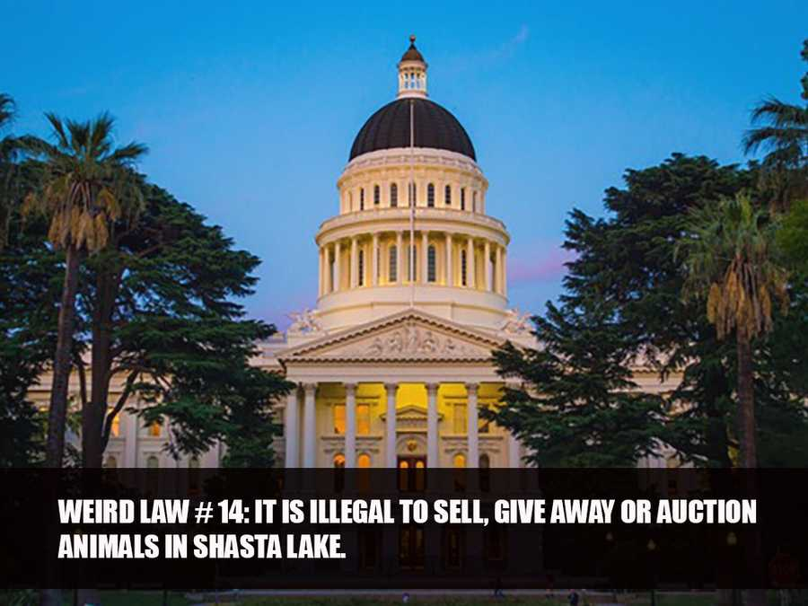 Source: Shasta Lake Municipal Code