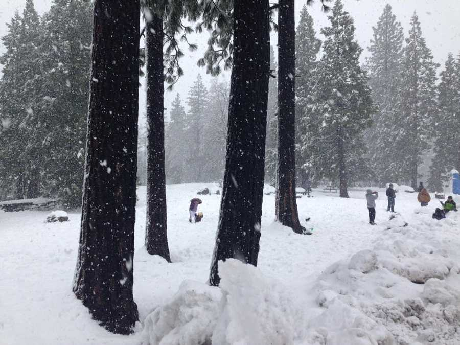 Snow falling in the Sierra Sunday creates a winter wonderland effect in March.