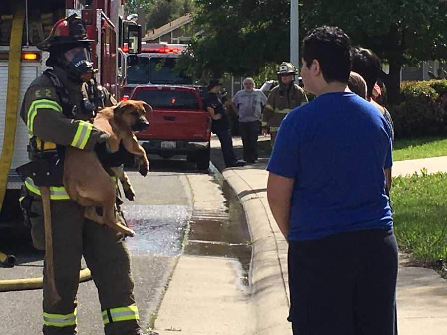 Roseville firefighters were able to rescue a pet dog from a house fire on Thursday, March 24, 2016. The Roseville Fire Department said two cats did not survive. Fire damage was contained to the second story of the home in the 2000 block of Longview Drive. Here are photos from the scene: