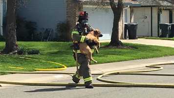 A Roseville firefighter carries a dog rescued from a burning home on Thursday, March 24, 2016.
