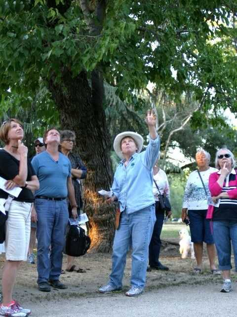 What: McKinley Park Tree Tour (April)Where: McKinley LibraryWhen: Sat 10am-NoonClick here for more information about this event.