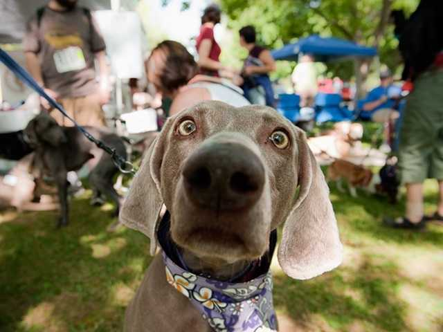 What: Doggy Dash and Bark at the Park FestivalWhere: William Land ParkWhen: Sat 9am-1pmClick here for more information about this event.