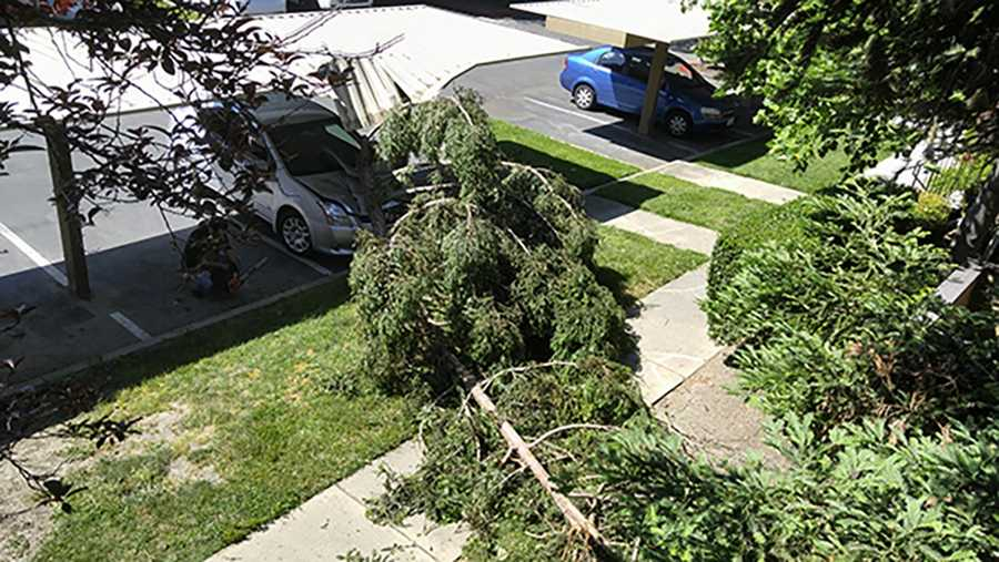 The blustery weather not only brought high wind gusts between 33 to 44 mph on Saturday, April 30, 2016 but also caused some damage. Here are some examples of the damage the wind caused in Sacramento and Stockton. Tree knocked down at apartment complex in Greenhaven and South Land Park in Sacramento.