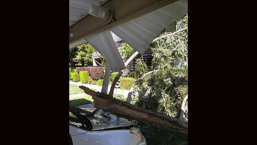 Another close-up of tree knocked down and damages a car in Pocket area, Greenhaven and South Land Park.