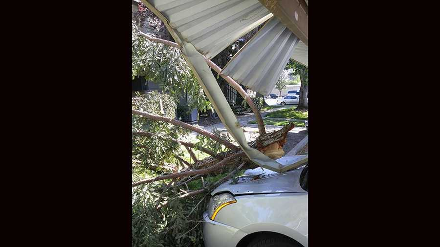 Close-up of tree knocked down and damages a car in Pocket area, Greenhaven and South Land Park.
