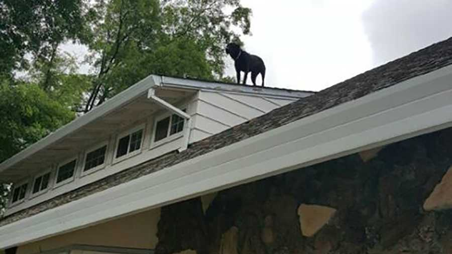 A dog was stuck on the roof of an El Dorado Hills home on Sunday, May 8, 2016, the El Dorado Hills Fire Department said.