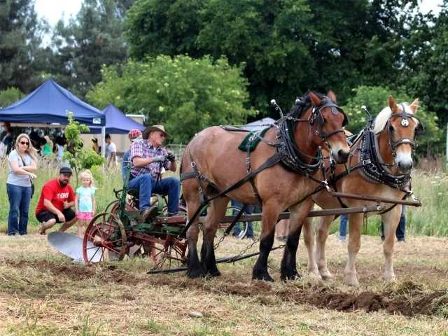 What: Day on the Farm 2016Where: Soil Born Farms American River RanchWhen: Sun 10am-3pmClick here for more information about this event.