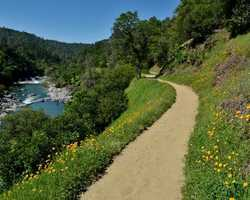 Buttermilk Bend Trail in the Nevada County town of Penn Valley is a 2.5-mile trail along the South Yuba River with gorgeous shots of wildflowers.