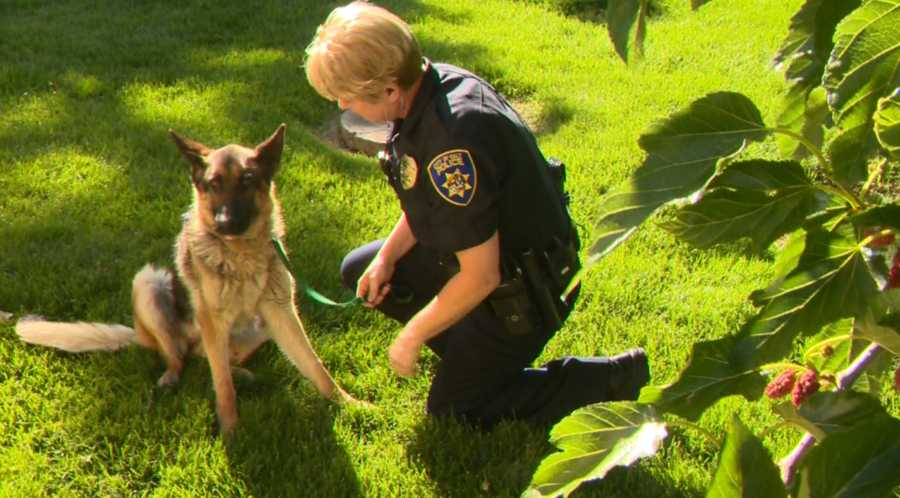 Freeway Frida and Officer Coelho enjoying some quality time on the grounds of the veterinary hospital.