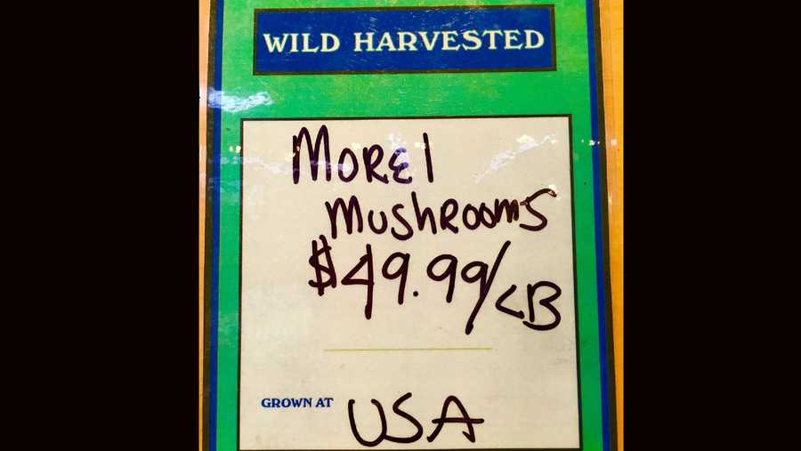 Looks can be deceiving for the sponge-like mushrooms, worth more than many people think.