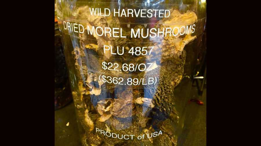 Wildfires in Northern California cause much destruction in its path. In an ironic twist, from the ashes sprouts a rare, delicious mushroom that is worth more expensive than it looks.When morel mushrooms are dried, they are even more expensive.