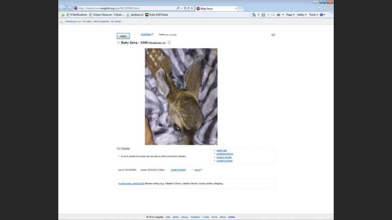A woman attempted to sell a fawn on Craigslist, officials said.