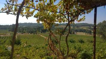 """Go wine tasting in the Sierra foothills. This a photo of the vista view from Shenandoah Vineyards.""--Edie Lambert, anchor"