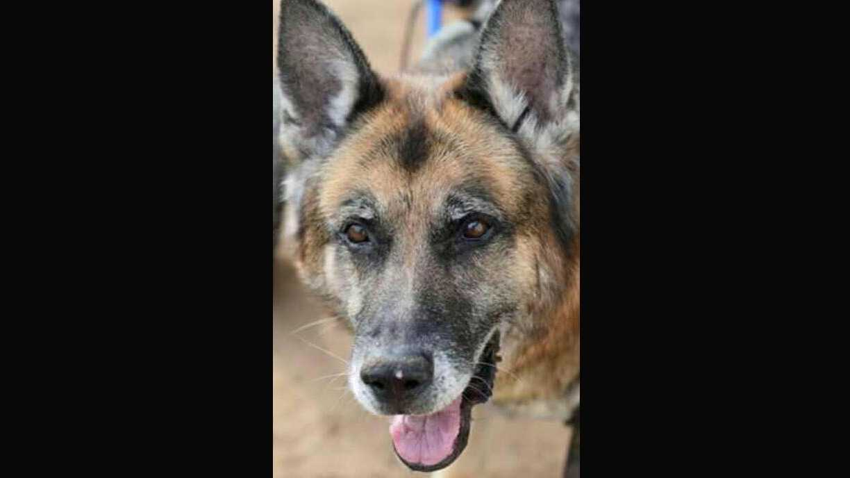Placer County Sheriff's Office K9 unit Scout passed away in his sleep Friday.