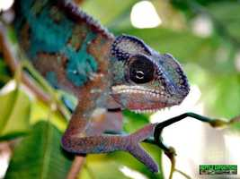 What: Sacramento Reptile ExpositionWhere: California Wedding HallWhen: Sat 10am-5pm&#x3B; Sun 10am-4pmClick here for more information on this event.