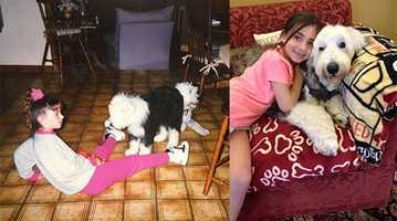 6.) Every family dog we had was an Old English Sheepdog. The picture on the left is of me with Bill (our new puppy at the time) and Sheila. The photo on the right is of my daughter Macy sitting next to my parents' dog Turner.