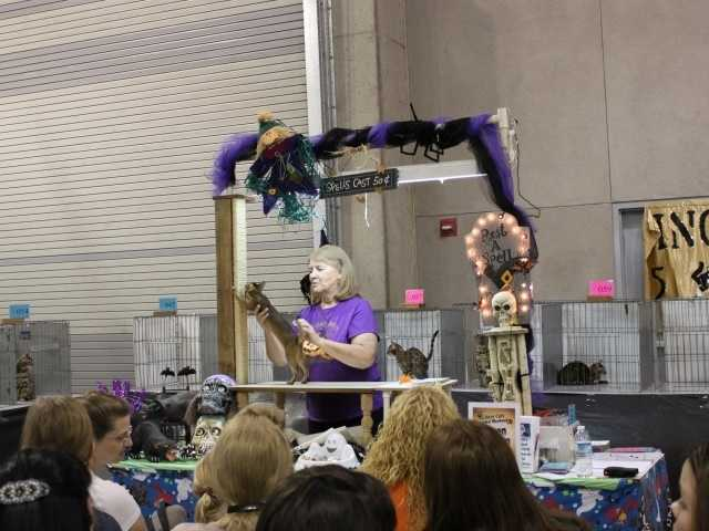 """What:""""Feline Like a Celebration: Cat and Kitten Show""""Where: McClellan Conference CenterWhen: Sat & Sun 9 am-5 pmClick here for more information about this event."""