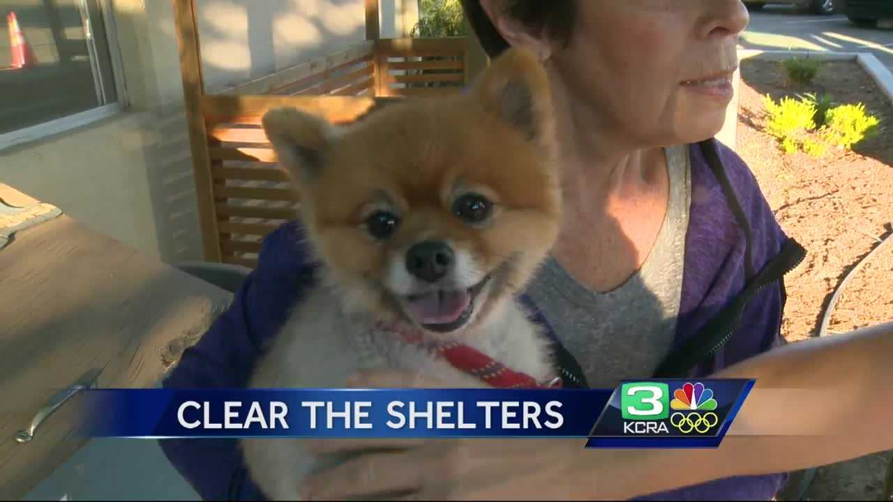"More than 300 animals in five Northern California animal shelters found new homes during the ""Clear the Shelter"" event on Saturday."